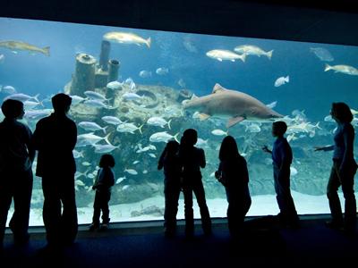 Vancouver Aquarium Trip